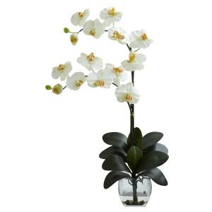 Double Phal Orchid w/Vase Arrangement