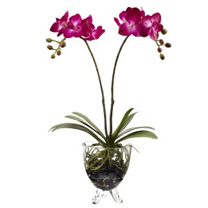 Double Phalaenopsis Elegance Arrangement