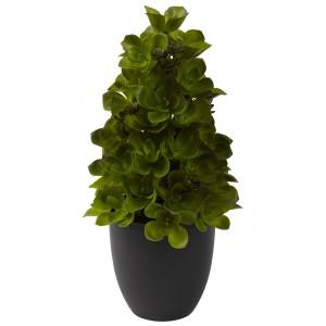 Echeveria Cone Topiary