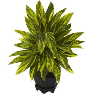 Ginger Plant w/Black Hexagon Planter