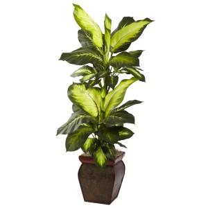 Golden Dieffenbachia w/Decorative Planter