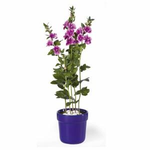 Mallow Silk Plant w/Blue Pot