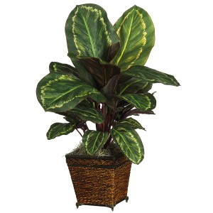 Maranta w/Wicker Vase Silk Plant