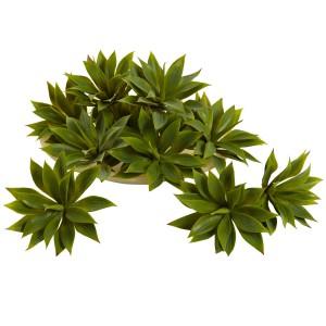 Mini Agave Succulent Plant (Set of 12)