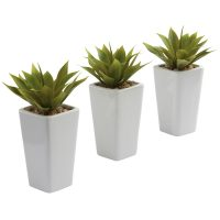 Mini Agave w/White Planter (Set of 3)