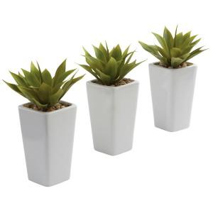 Mini Agave w/White Planter (Set of 3)