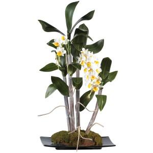 Mini Dendrobium w/Black Rectangle Dish