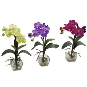 Mini Vanda Orchid Arrangement (Set of 3)