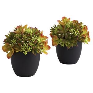 Mixed Succulent w/Black Planter