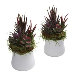 Mixed Succulent w/White Planter (Set of 2)