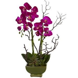 Orchid & Succulent Arrangement