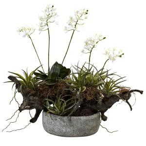 Orchid & Succulent Garden w/Driftwood & Decorative Vase
