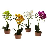 Phalaenopsis Orchid w/Clay Vase (Set of 4)