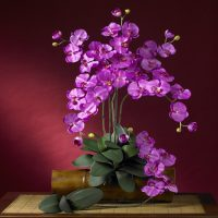 Phalaenopsis Silk Orchid Flower (Set of 12)