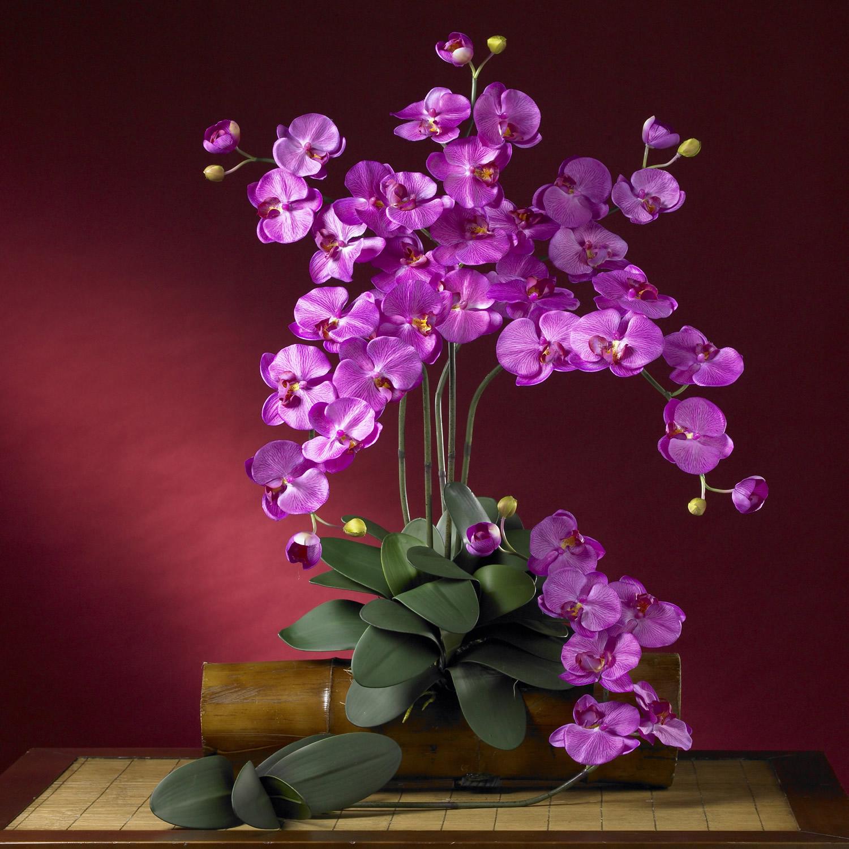 Phalaenopsis Silk Orchid Flower (Set of 12) - Silk Specialties