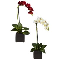 Phaleanopsis Orchid w/Black Vase Silk Arrangement (Set of 2)