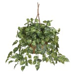 Pothos Hanging Basket Silk Plant
