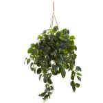 Pothos Hanging Basket UV Resistant (Indoor/Outdoor)
