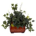 Puff Ivy w/Chest Silk Plant