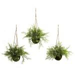 Ruscus, Sedum & Springeri Hanging Basket (Set of 3)