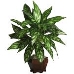Silver King  w/Wood Vase Silk Plant
