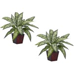 Silver Queen Silk Plant (Set of 2)