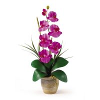 Single Stem Phalaenopsis Orchid Silk Flower Arrangement