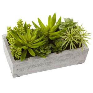 Succulent Garden w/Concrete Planter