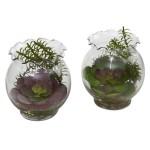 Succulent w/Fluted Bowl (Set of 2)