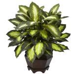 Triple Golden Dieffenbachia w/Wood Vase