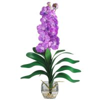 Vanda Liquid Illusion